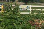 clinton-co-ffa-st-garden